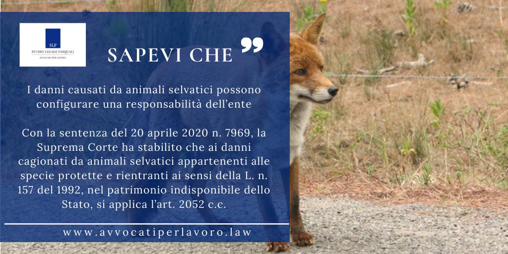 I danni causati da animali selvatici possono configurare una responsabilità dell'ente
